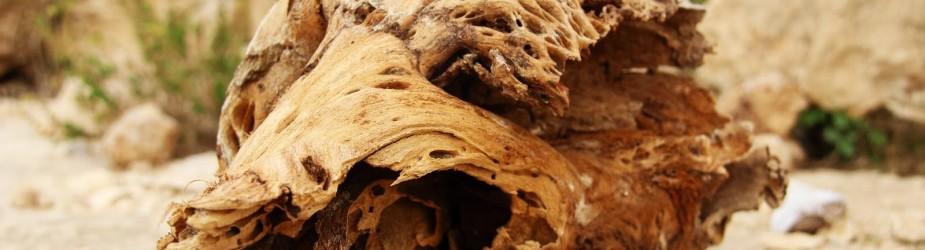 שביל ישראל מקטע: מהר קינה עד נחל חימר